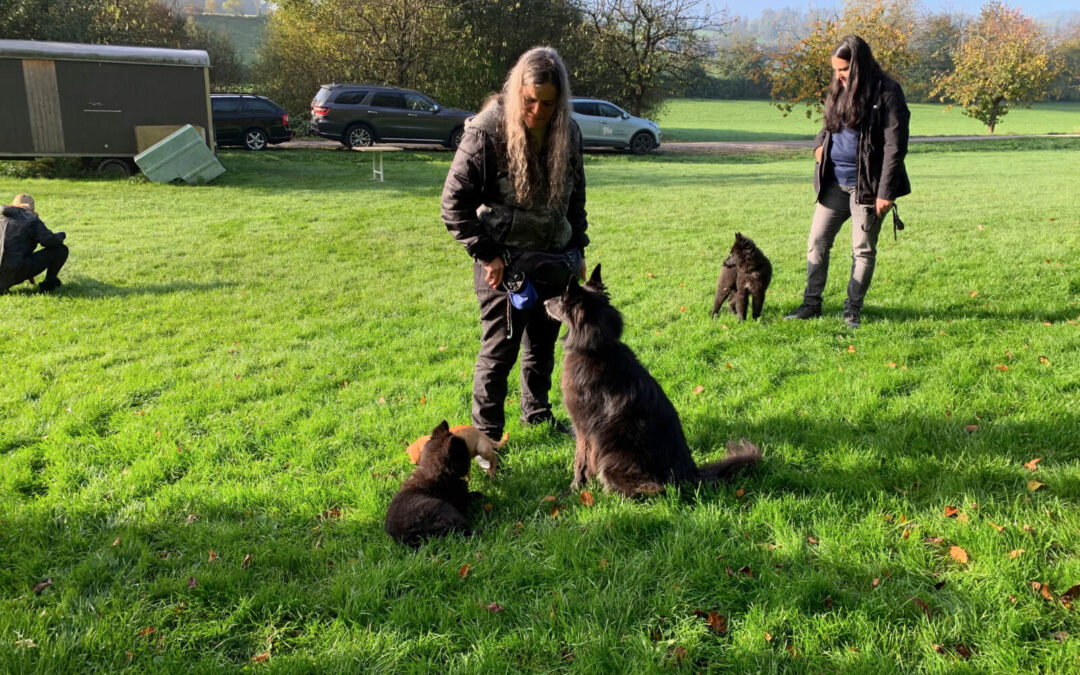 Neue Hundeerziehungskurse 2020